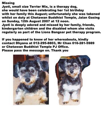 Jyoti Lost Dog